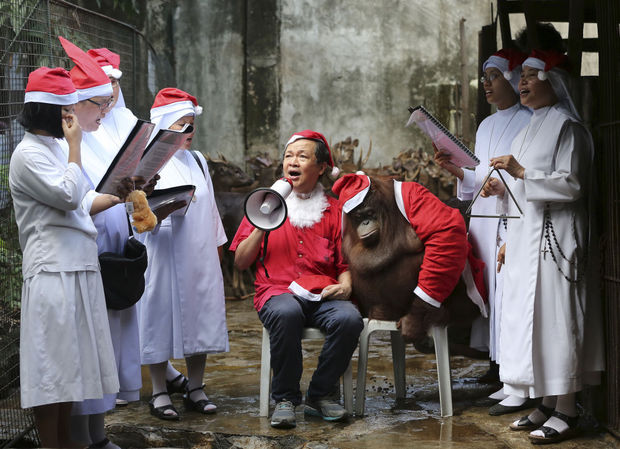 nuns and malabon zoo owner sings christmas carols beside pacquiao orangutan