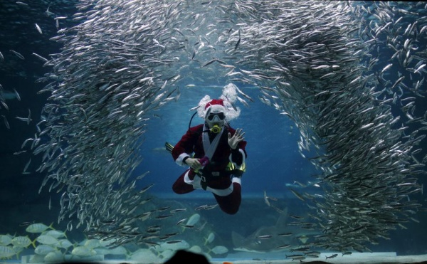 """A diver dressed in a Santa Claus costume swims with sardines during a promotional event for Christmas """"Sardines Feeding Show with Santa Claus"""" at the Coex Aquarium in Seoul, South Korea, December 9, 2015. REUTERS/Kim Hong-Ji"""