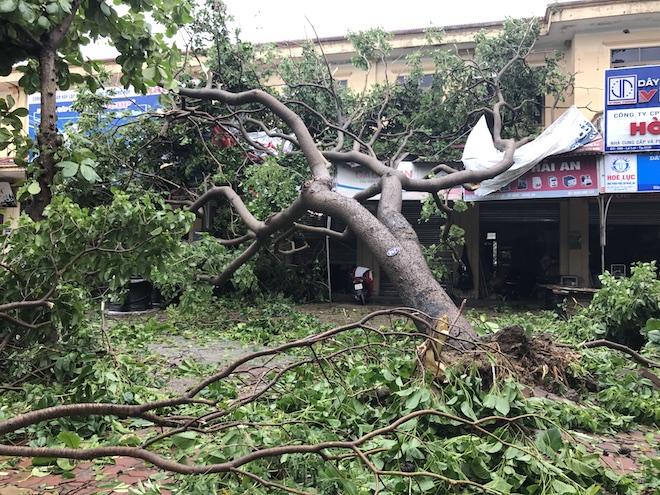 1 cây canh lớn đổ đè lên 4 nhà dân trên đường Lê Lợi. May mắn đã không có ai bị thương.