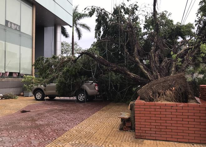 Một chiếc ô tô bán tải đậu trước khách sạn Thượng Hải Vinh đã bị cây xanh lớn đổ đè lên toàn bộ.