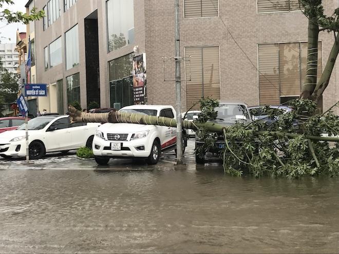2 chiếc ô tô đậu tại khách sạn Mường Thanh Cửa Đông bị cây xanh lớn bật gốc bay đè hẳn lên, hư hỏng.