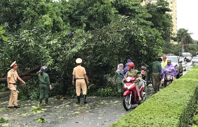 Lực lượng CSGT cùng nhân viên công ty cây xanh chặt cây giải phóng giao thông trên đường Lê Lợi.