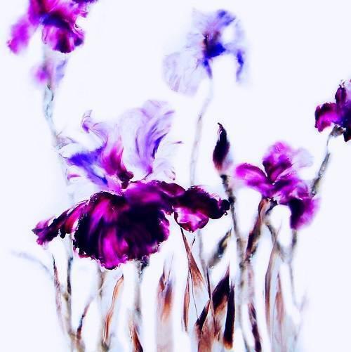 Thuy - Iris 1