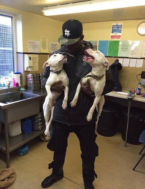 Mario Balotelli cùng hai chú chó mới nhận nuôi Staffordshire Bull Terriers