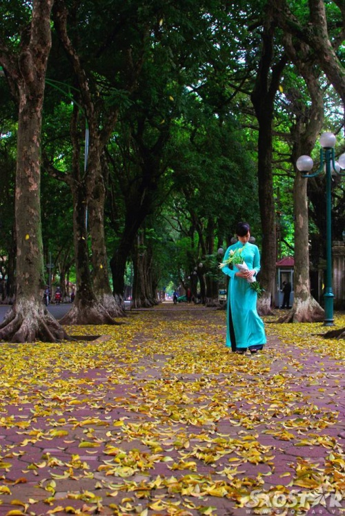 Phố dịu dàng bởi hình ảnh những thiếu nữ e ấp dạo bước trên thảm lá.