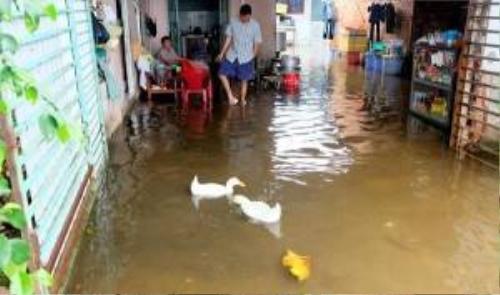 Nước tràn vào nhà dân gây ngập nghiêm trọng, vịt cũng bơi tung tăng vào nhà