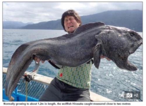 Ông Hirasaka Hiroshi và con cá sói dài 2 m - Ảnh chụp màn hình Daily Mail