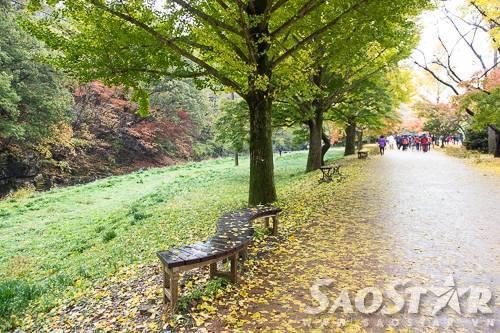 Ghế băng được đặt dọc theo đường vào chùa để khách nghỉ chân