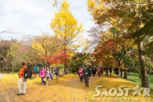 Du khách đến thăm chùa Seonunsa vào mùa thu được đón tiếp bằng một thảm lá vàng rực rỡ