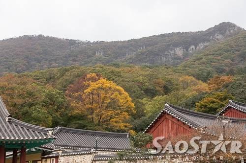 Khu rừng tuyệt đẹp sau lưng chùa