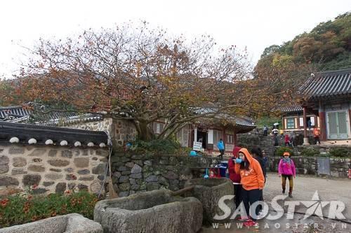 chua-seonunsa-han-quoc-mua-thu-_MG_8164