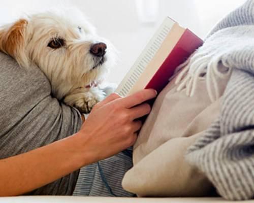 Cho thú cưng ngủ riêng để bảo vệ sức khỏe cho cả hai.