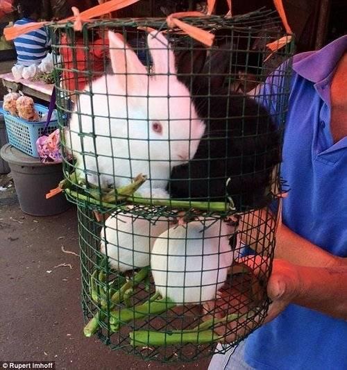 Nhiều loài vật nuôi khác như mèo, thỏ, dơi, chuột rừng, lợn hay thậm chí là rắn cũng đều phải chịu chung số phận nghiệt ngã và tàn bạo này.