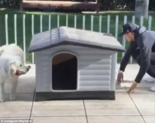 Neymar chơi trốn tìm cùng thú cưng.