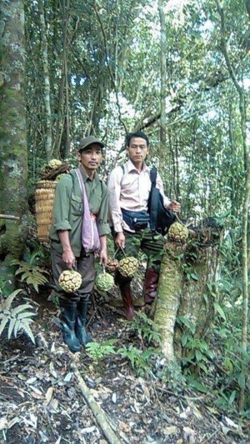 Người dân ở Sơn La trong một chuyến đi hái na rừng. Ảnh: AL.