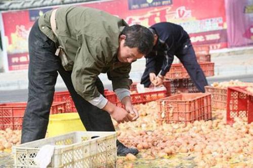 Những người qua đường đã nhiệt tình giúp chủ xe thu gom trứng.
