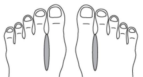 Huyệt giữa hai ngón chân liên kết với hệ bạch huyết trong cơ thể