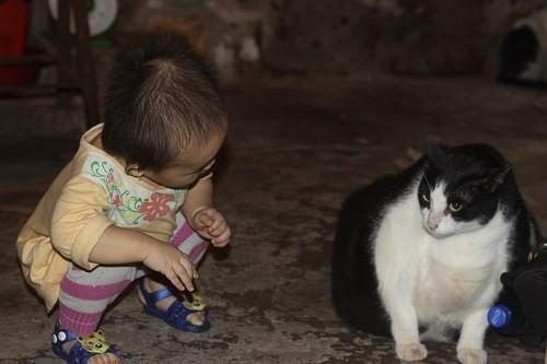 Mèo và bé.