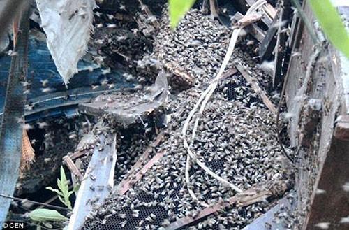 Có khoảng 2 triệu con ong bay ra khỏi các thùng đựng trên xe.