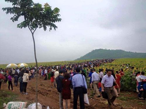 Hình ảnh người người chen chân nhau tại cánh đồng hoa hướng dương - (Nguồn: FB).