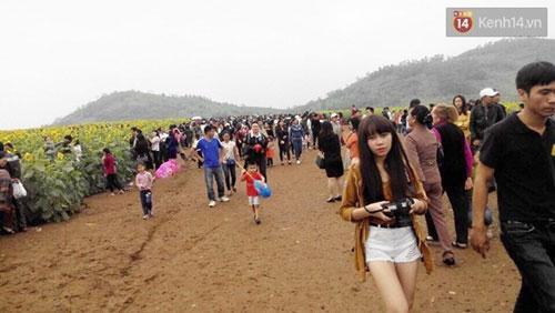 Nhiều gia đình, các bạn trẻ và các cặp uyên ương tranh thủ dịp cuối tuần đến thăm cánh đồng hoa - (Ảnh: Phương Thảo).