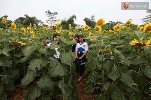 Nhiều bạn trẻ đi vào sâu vào trong cánh đồng hoa chụp ảnh để lưu lại những khoảnh khắc đẹp nhất - (Ảnh: Phương Thảo).