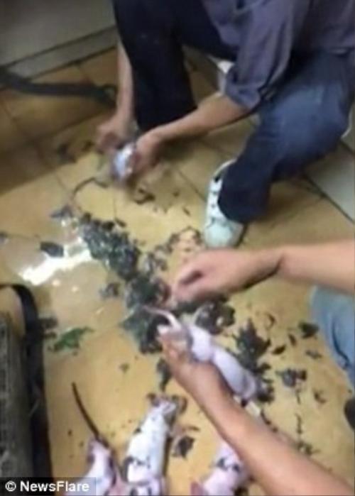 Trong một khoảng không gian chật hẹp, những con chuột bị làm thịt một cách thành thạo.
