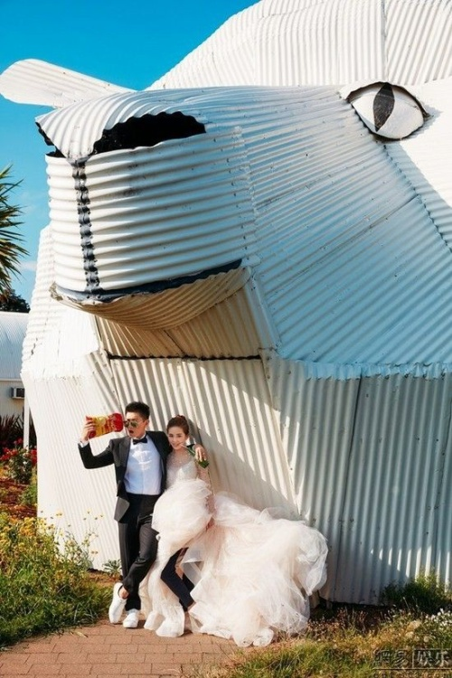 Khoảnh khắc đi đến khắp nơi của cặp đôi sắp cưới.