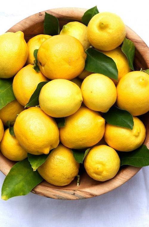 Giảm sốt và thông đờm hiệu quả, chứa nhiều vitamin giúp tăng cường sức đề kháng và hệ miện dich cho cơ thể.