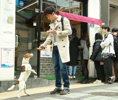 Thấy một chú chó, anh cố tình đưa miếng gà chiên lên cao khiến chú chó phải nhướn hết cỡ.