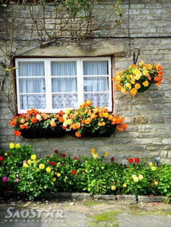 Những ô cửa sổ với các bông hoa rực rỡ khoe sắc.