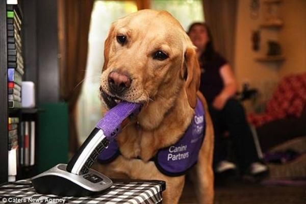 Chú chó được huấn luyện đặc biệt để giúp những người bị bệnh như Clare.