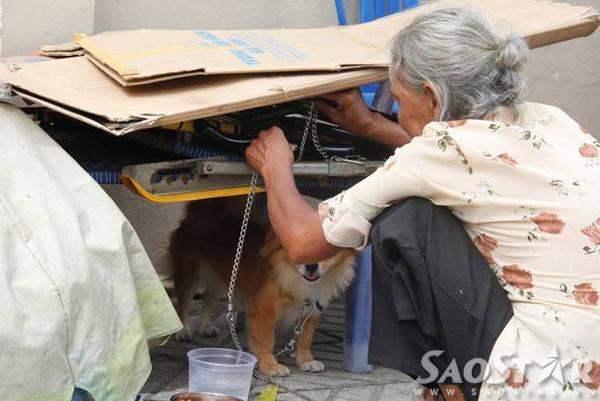 8.Người dân ở gần thấy bà thương chó nên thường xuyên đem thức ăn cho bà, nhiều người tốt bụng còn nhặt ve chai giúp bà để bà về sớm. Mỗi khi trời nắng gắt hay mưa lớn bà lại đội nắng đội mưa tìm cách che chỗ ở cho 2 chú chó nhỏ.