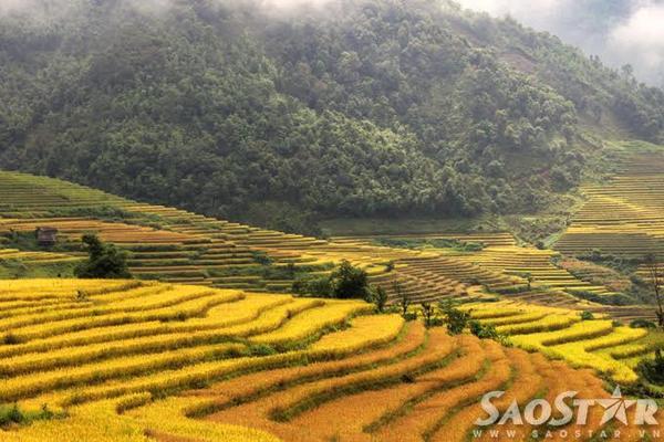 Lao Cai 3
