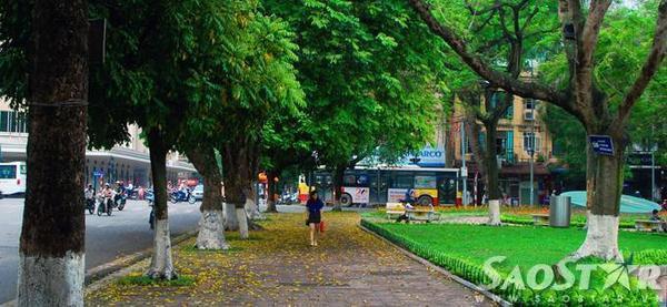"""""""Lá trút rơi nhiều đâu phải bởi mùa thu..."""". Những người sống và yêu thủ đô đều hiều, mùa lá rụng ở Hà Nội chỉ kéo dài 2-3 tuần tháng 4 và cuối tháng 8, đầu tháng 9, thời khắc đất trời chuyển giao."""