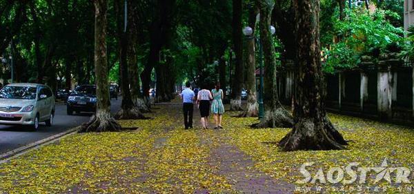 Phố Phan Đình Phùng luôn là địa điểm được nhiều người ghé thăm nhất bởi 3 hàng sấu cổ thụ lâu năm trồng dọc vỉa hè...