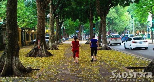 Từng con đường, góc phố được dệt thảm vàng, hòa cùng nhip sống của người dân đã tạo nên những hình ảnh rất đặc trưng của Hà Nội.