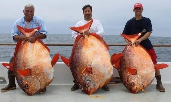 Những người đi câu may mắn khi bắt được 3 chú cá Mặt trăng chỉ trong một ngày tại Mỹ
