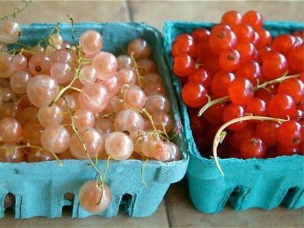 Về đến Việt Nam, nho currant có giá lên đến 2 triệu đồng/kg