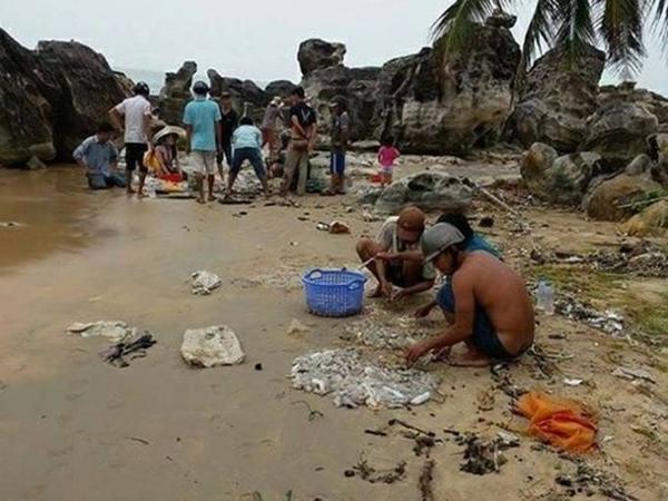 Người dân Phú Quốc đi nhặt hải sâm về bán - Ảnh: Ng.H