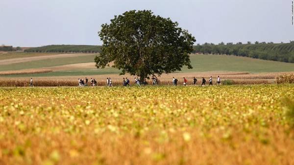 Dân tị nạn đi bộ ngang qua cánh đồng gần tỉnh Tovarnik, Croatia. Sau khi Hungary đóng cửa biên giới, những người này đã được chính phủ Croatia chào đón, cưu mang.