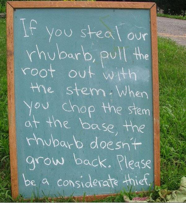 """""""Nếu bạn muốn trộm cây đại hoàng thì hãy nhổ cả gốc lẫn thân. Bởi vì khi bạn chỉ nhổ thân và chừa lại rễ thì chúng sẽ không thể mọc lại được nữa. Hãy là một tên trộm tử tế."""""""