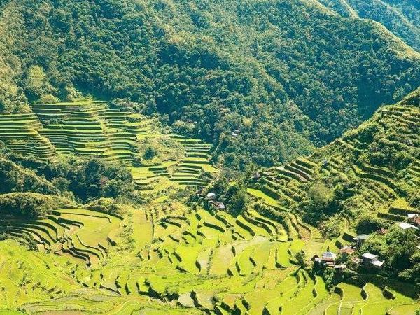 Khoảng 1500 người dân của làng Batad sống ẩn mình trong màu xanh ngút ngàn của tuộng bậc thang trồng lúa Ifugao. Không có con đường nào vào làng nhưng bạn có thể men theo những con đường mòn. Đây sẽ là trải nghiệm mà bạn không thể có được ở những nơi khác.