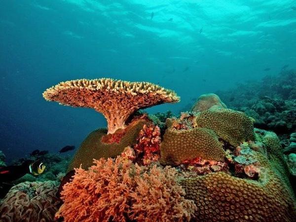 Tubbataha Reef, khu bảo tồn biển và chim trên biển ở Sulu. Bạn sẽ có cơ hội tận mắt nhìn thấy các sinh vật dưới biển. Ngoài ra, hai đảo san hô lớn và một rạn san hô cũng đang chờ bạn ghé thăm.