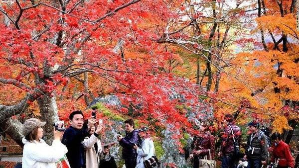 Chùa Hogonin. Lá đổi màu vào mùa thu luôn nhận được sự yêu mến ở Nhật Bản. Rất nhiều du khách đến Kyoto chỉ để ngắm cảnh sắc tuyệt đẹp này ở chùa Hogonin.