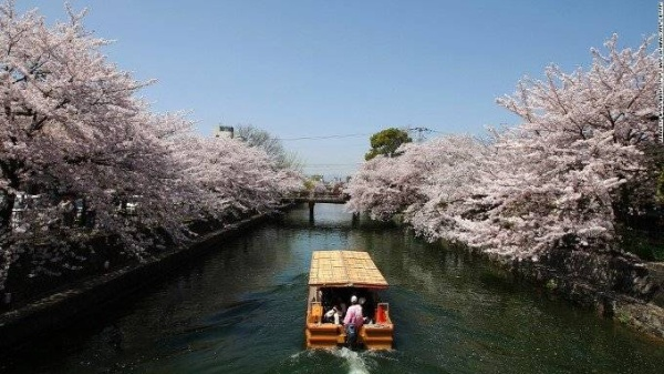 Dòng kênh hoa anh đào. Vào mùa xuân, du khách sẽ được xuôi mình theo dòng kênh Okazaki để thưởng thức vẻ đẹp của hoa anh đào.