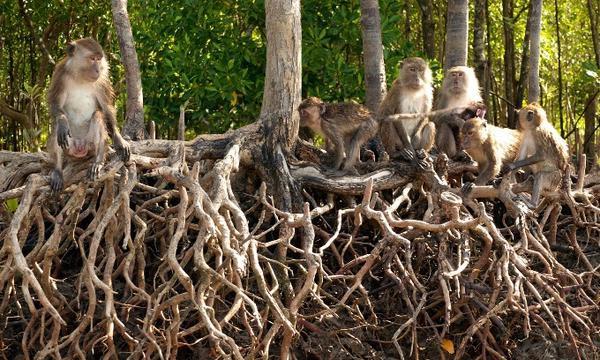 Đây là nơi để tận hưởng không khí mát mẻ và sự yên tĩnh bởi tách biệt khỏi đám đông, Koh Lanta nằm ở ngoài khơi phía tây nam, cách xa Koh Phi Phi ồn ảo. Các nhà hàng hải sản nổi tiếng  gần Saladan nhưng nhớ khám phá hết đảo với những bờ biển vắng, khu rừng nhiệt đới, rừng ngập mặn, thác nước trên mũi phía nam. Ngoài ra, công viên quốc  gia Mu Ko là nơi bạn dễ dàng thấy những chú khỉ ăn cắp kem từ du khách.