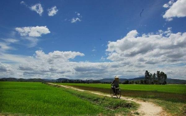 Những con đường gập ghềnh giữa cánh đồng có thể tìm được ở nhiều nơi trên đồng lúa Tuy Hòa.