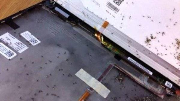 tai-sao-laptop-cua-ban-rat-hay-bi-kien-lam-to (1)