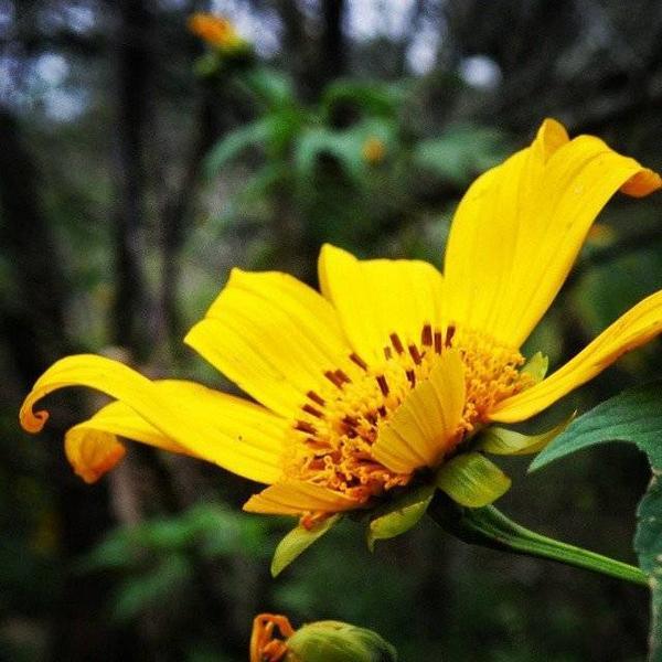 Hoa da quy (2)